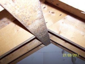 Schimmelbildung an Dachkonstruktion
